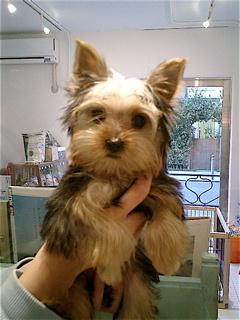 hundehutte2007-35