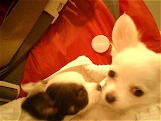 hundehutte2007-39