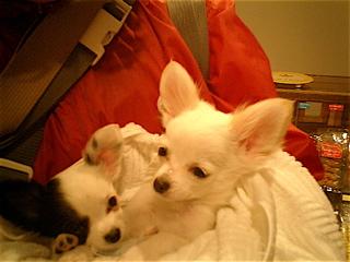 hundehutte2007-40