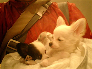 hundehutte2007-41