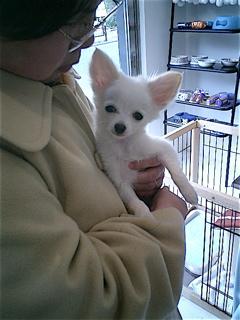 hundehutte2007-42