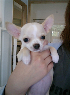 hundehutte2007-43