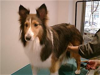 hundehutte2007-44