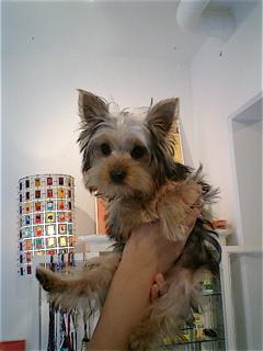 hundehutte2007-45