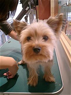 hundehutte2007-64