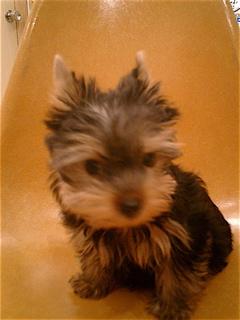 hundehutte2007-68