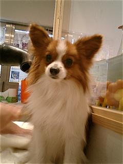 hundehutte2007-73