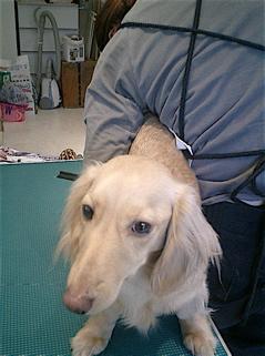 hundehutte2007-78