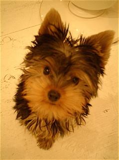 hundehutte2007-79