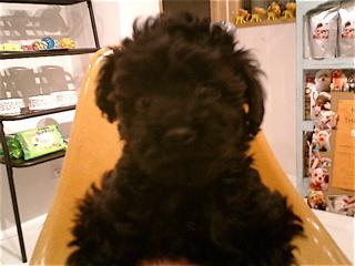 hundehutte2007-80