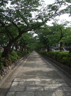20090518鎌倉16