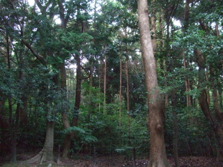 20081020鎌倉2