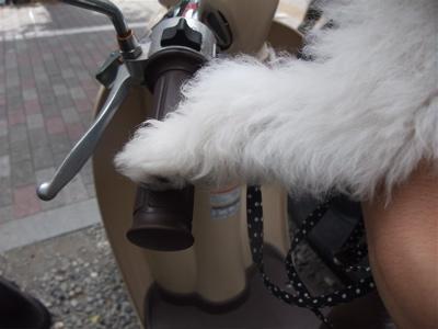 20090910 ビションフリーゼ フントヒュッテ バイク 5