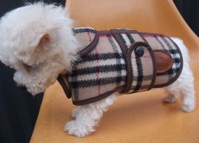 Burberrys バーバリー ウールチェックコート ドッグウェア 犬用ウェア ビションフリーゼ ドッグモデル 4