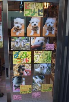 ビションフリーゼ フントヒュッテ hundehutte 文京区 本駒込 こいぬ 仔犬 子犬 1