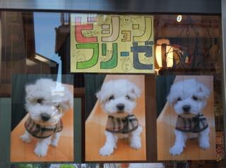 ビションフリーゼ フントヒュッテ hundehutte 文京区 本駒込 こいぬ 仔犬 子犬 2