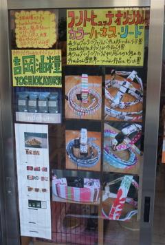 ビションフリーゼ こいぬ 仔犬 子犬 フントヒュッテ hundehutte オリジナルカラー オリジナルリード オリジナルハーネス 2