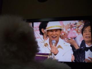 ビションフリーゼ こいぬ 仔犬 子犬 フントヒュッテ hundehutte 大晦日 紅白歌合戦 NHK 5