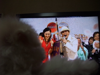 ビションフリーゼ こいぬ 仔犬 子犬 フントヒュッテ hundehutte 大晦日 紅白歌合戦 NHK 6