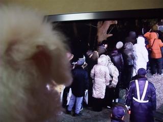 ビションフリーゼ こいぬ 仔犬 子犬 フントヒュッテ hundehutte 大晦日 紅白歌合戦 NHK 7