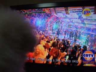 ビションフリーゼ こいぬ 仔犬 子犬 フントヒュッテ hundehutte 大晦日 紅白歌合戦 NHK 9