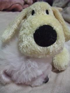 ビションフリーゼ こいぬ 仔犬 子犬 フントヒュッテ hundehutte 大晦日 紅白歌合戦 NHK 12
