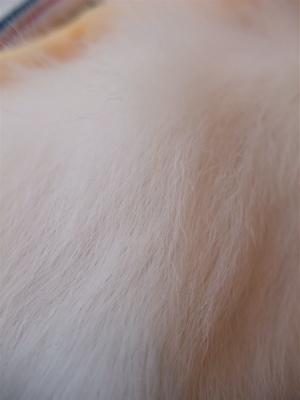 ビションフリーゼ フントヒュッテ hundehutte スリッカーブラシ ブラッシング コーミング コーム 日頃のケア こいぬ 仔犬 子犬 12