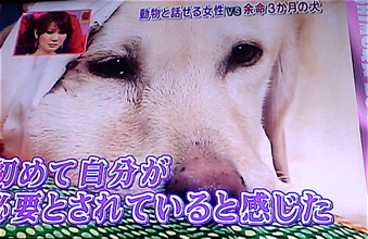 動物と話せる女性 余命3ヵ月の犬 天才!志村どうぶつ園 ハイジ