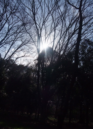 大阪城公園 1
