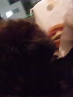 スパイシーモスチーズバーガー トイプードル シルバー こいぬ 仔犬 子犬 フントヒュッテ hundehutte 2
