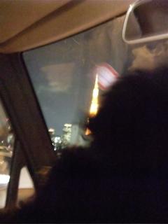 トイプードル シルバー こいぬ 仔犬 子犬 フントヒュッテ hundehutte 東京タワー