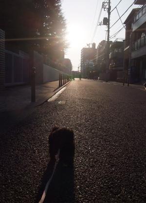 トイプードル シルバー フントヒュッテ hundehutte カラー 首輪 ハーネス リード こいぬ 仔犬 子犬 おさんぽ 2