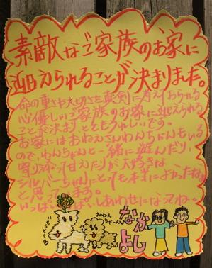 トイプードル シルバー 子犬情報 仔犬情報 こいぬ情報 フントヒュッテ hundehutte 東京都文京区 おめでとう 1