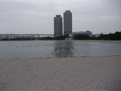 お台場 海浜公園 おさんぽ 犬 ドッグ わんこ フントヒュッテ hundehutte 東京都文京区 トリミングサロン 6