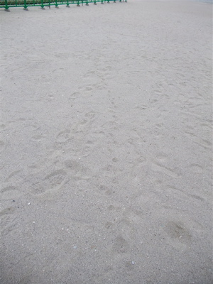 お台場 海浜公園 おさんぽ 犬 ドッグ わんこ フントヒュッテ hundehutte 東京都文京区 トリミングサロン 12