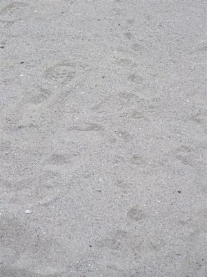 お台場 海浜公園 おさんぽ 犬 ドッグ わんこ フントヒュッテ hundehutte 東京都文京区 トリミングサロン 13