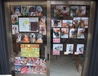 こいぬ情報 仔犬情報 子犬情報 フントヒュッテ hundehutte チワワ ビションフリーゼ 東京 文京区 2