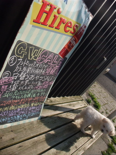 Hires ROOT BEER ヴィンテージ看板 ビションフリーゼ フントヒュッテ hundehutte トリミングサロン こいぬ情報 仔犬情報 子犬情報 東京 文京区