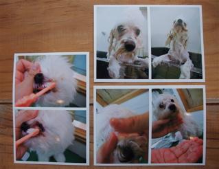 フントヒュッテhundehutte東京ビションフリーゼ赤ちゃん子犬こいぬブリーダー文京区トリミングサロンビションカットアフロカットフントヒュッテオリジナルリード2.jpg