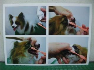フントヒュッテhundehutte東京ビションフリーゼ赤ちゃん子犬こいぬブリーダー文京区トリミングサロンビションカットアフロカットフントヒュッテオリジナルリード6.jpg