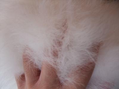ビションフリーゼブリーダー出産こいぬ子犬東京フントヒュッテ文京区トリミングサロンビションカットアフロカットブラッシングローレンススリッカーブラシ13.jpg