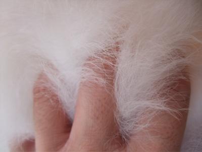 ビションフリーゼブリーダー出産こいぬ子犬東京フントヒュッテ文京区トリミングサロンビションカットアフロカットブラッシングローレンススリッカーブラシ14.jpg