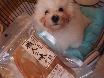 ビションフリーゼブリーダー出産赤ちゃん子犬東京フントヒュッテhundehutte文京区トリミングサロンビションカットアフロカット毛量の多いビション職人の味牛アキレス1.jpg