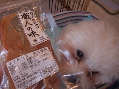 ビションフリーゼブリーダー出産赤ちゃん子犬東京フントヒュッテhundehutte文京区トリミングサロンビションカットアフロカット毛量の多いビション職人の味牛アキレス2.jpg