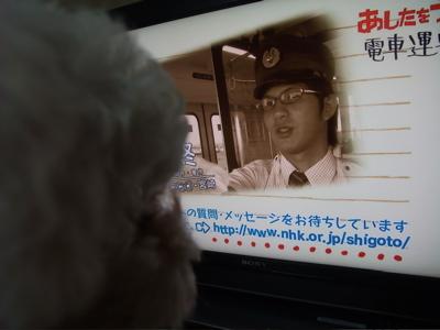 ビションフリーゼブリーダー子犬東京フントヒュッテ文京区トリミングサロンビションカット毛量の多いビション混合ワクチン接種ノミダニフィラリア予防hundehutte8.jpg