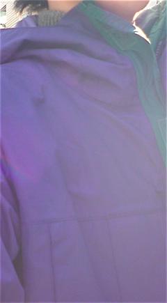 patagonia山ガールパタゴニアビションフリーゼブリーダー子犬東京フントヒュッテ文京区トリミングサロンビションカットアフロカット良血統毛量の多いビション.jpg
