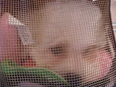 子犬こいぬのお迎えビションフリーゼブリーダー東京フントヒュッテhundehutte文京区トリミングサロンビションカットアフロカット良血統ビション毛量の多いビション3.jpg