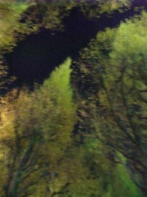 明治神宮外苑いちょう祭り外苑いちょう並木表参道東京hundehutteフントヒュッテビションフリーゼブリーダー子犬文京区トリミングサロンビションカットアフロカット5.jpg