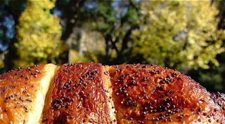あんこギッフェリナチュラルローソン焼きたてパンベーカリークロワッサンフントヒュッテ東京ビションフリーゼブリーダー文京区トリミングサロンビションカット.jpg