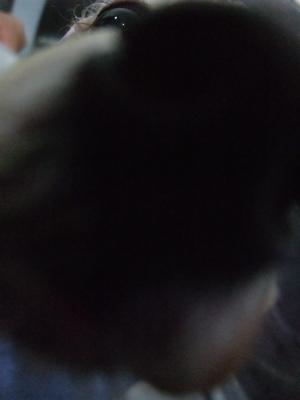 ビションフリーゼトリミング文京区トリミングサロンビションカットアフロカットビションフリーゼブリーダー子犬安田美沙子はんな先輩東京フントヒュッテhundehutte1.jpg